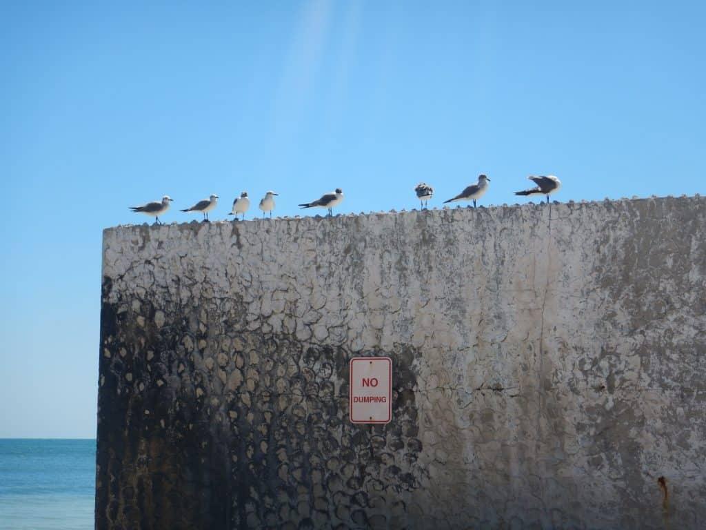 Key West birds -Roadtrip
