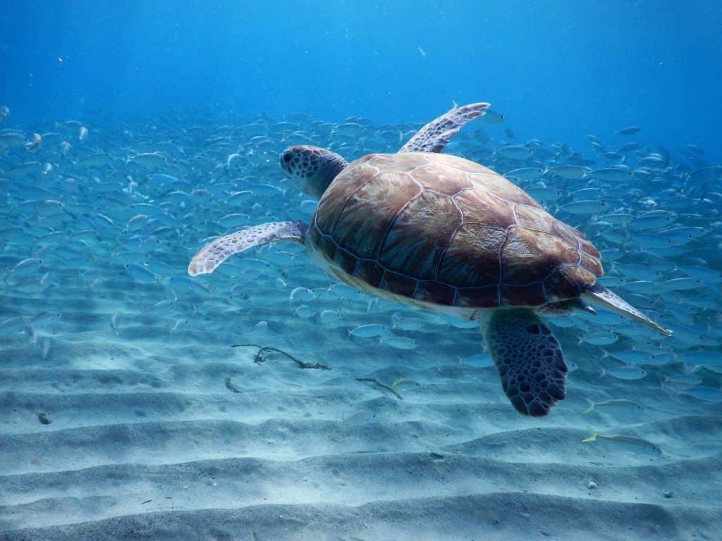 Seaturtle Playa Grandi Curaçao - Wat te doen Curaçao