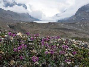 Athabasca Glacier, Sunwapta & Athabasca Falls Jasper