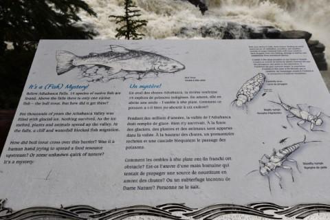 Athabasca Falls Jasper