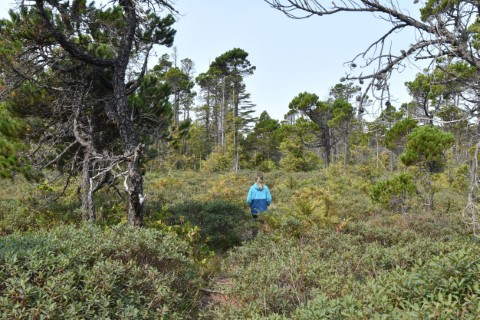 Vargas Island BC - Hike