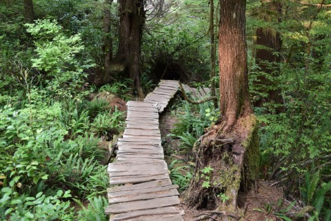 Meares Island BC - Wandeling