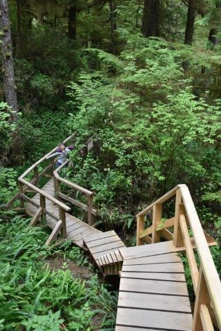 Rainforest Trail A & B