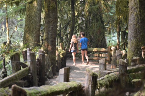 Cathedral Grove wandeling