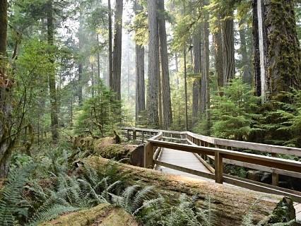 Cathedral Grove – MacMillan Provincial Park