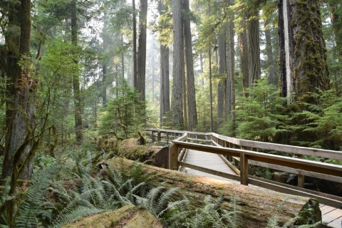 Cathedral Grove - MacMillan Provincial Park