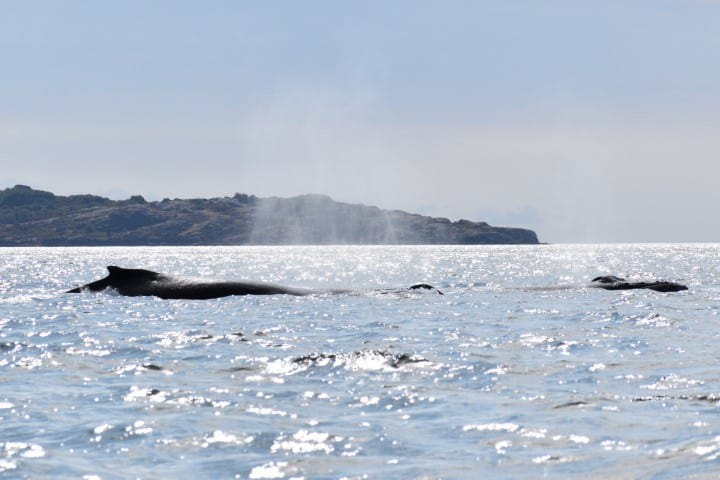 Whale Watching Campbell River