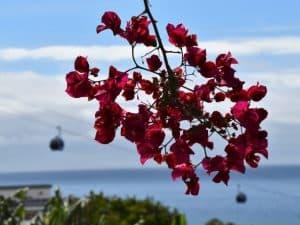 Madeira bezienswaardigheden en wat te doen!