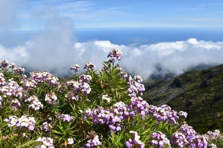 Pico Ruivo Hike