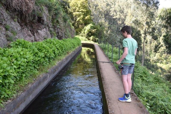 Forelvissen Madeira
