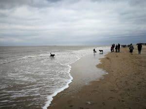 Cadzand wandelen: mag je hond er vrij loslopen?