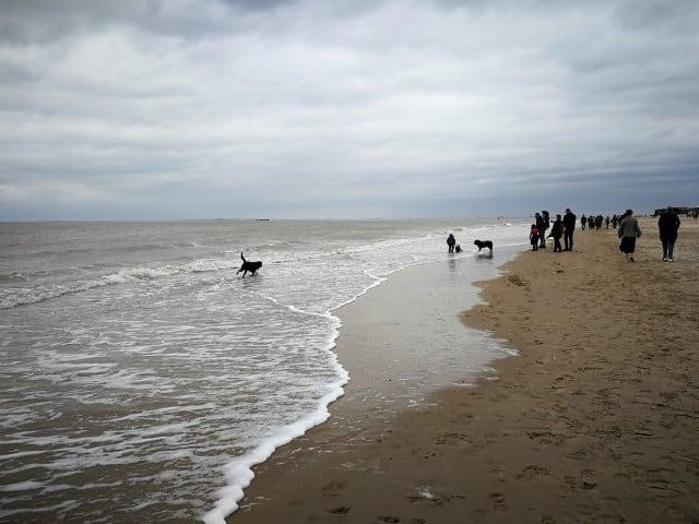 Wandeling Cadzand: mag je hond er vrij loslopen?