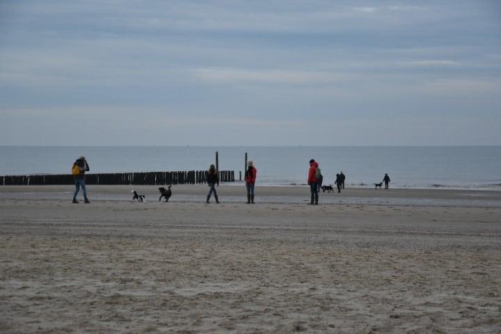Hond los op het strand van Groede